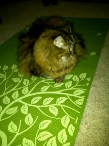 Do a little yoga