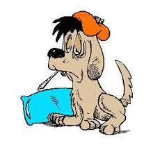 sick pup